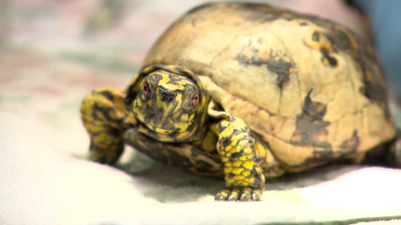 Turtle (WGHP)