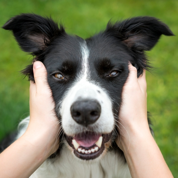 Stock image of a dog (Getty Images)