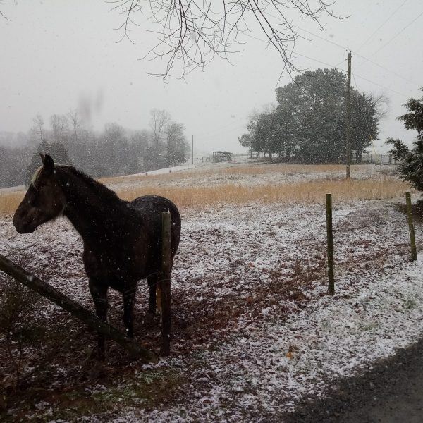 Snow in Elkin (Submitted photo)