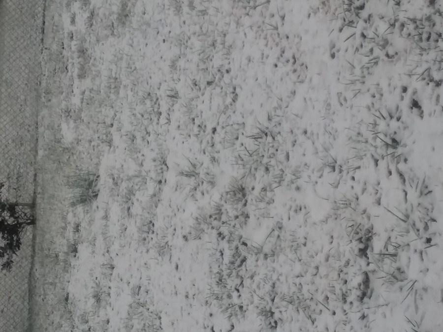 The snow in Greensboro