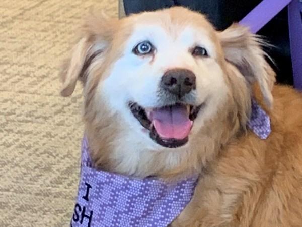 Meet Beau, FOX8's Pet of the Week.
