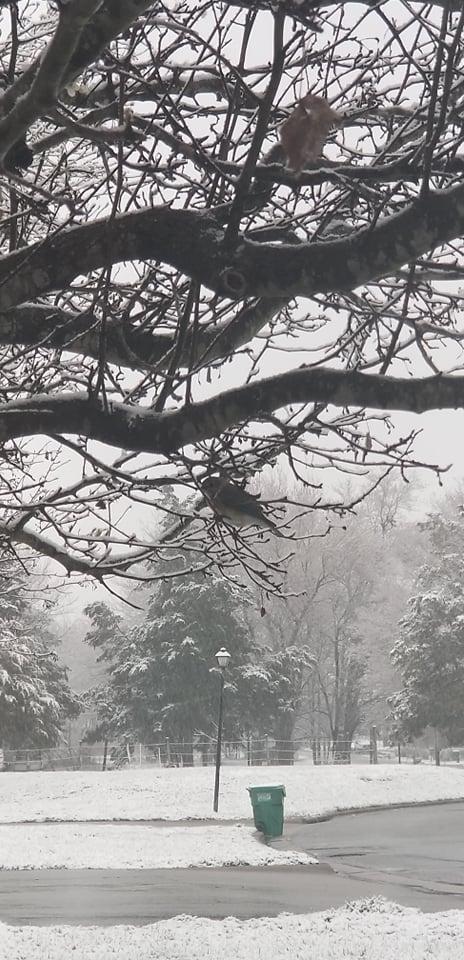 Birds in the snow in High Point (Hallie McCray)