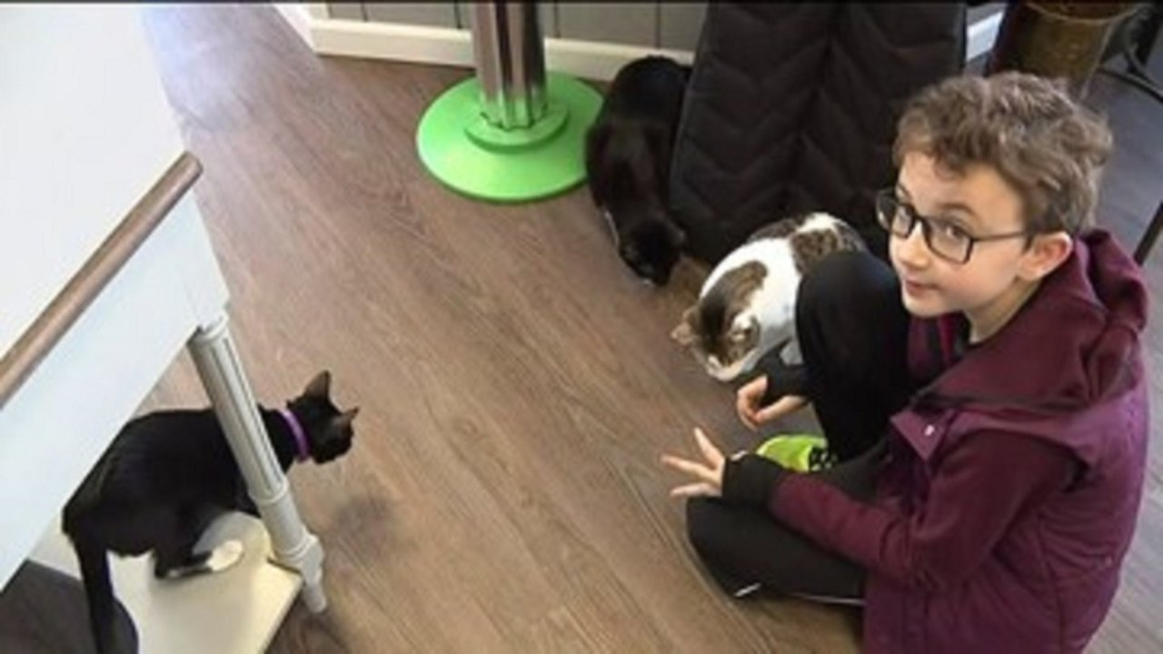 Boy donates birthday money to cat cafe
