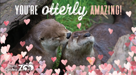 NC Zoo offering free animal-themed Valentine's Day cards