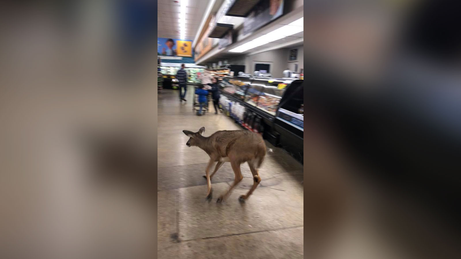 """Customers inside an Indiana Kroger were surprised to see a deer running """"frantically"""" in the store. Staff and police tried to catch the deer but it eventually made it back outside. (Mia Nail Spa VonMia from Facebook)"""