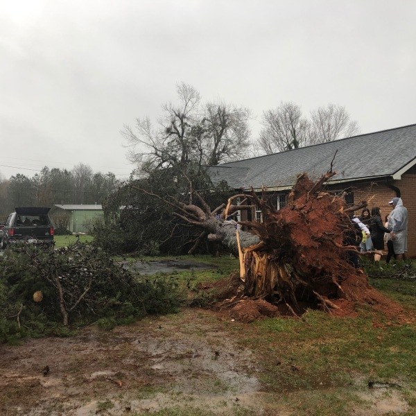 Large tree down at home in Liberty (Hayley Fixler/WGHP)