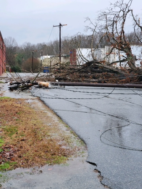 Trees down in Liberty (Submitted)