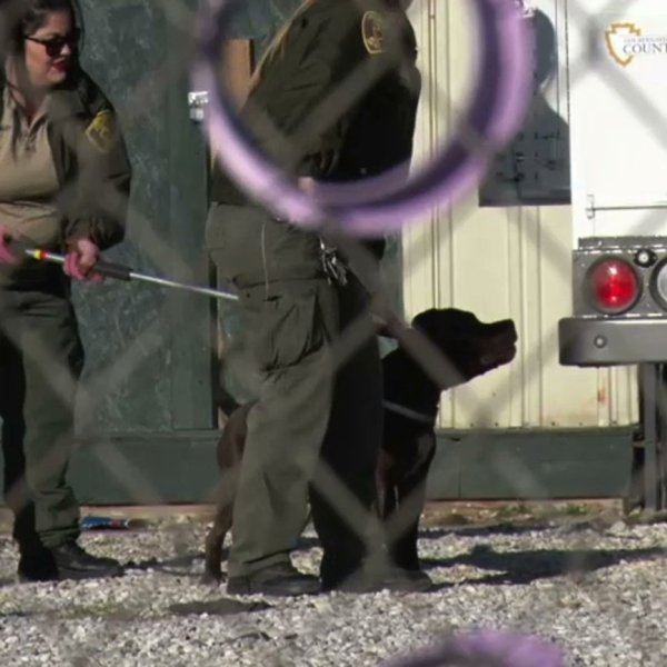 A 5-year-old Southern California boy died after being attacked by his family's pit bull Monday afternoon, San Bernardino County Sheriff's Department officials said.