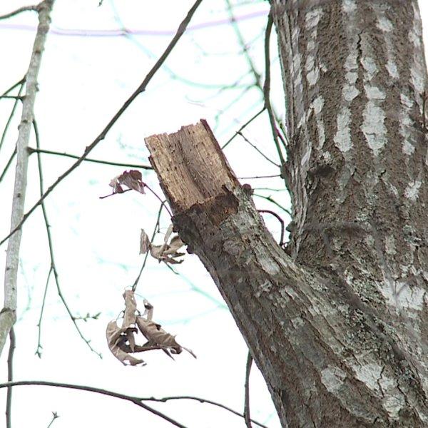Man has life-threatening injuries after tree falls in Randleman
