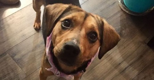 Dog at center of animal cruelty case now up for adoption in Durham