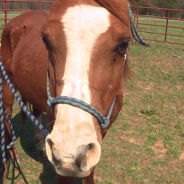 Meet Louie, FOX8's Pet of the Week