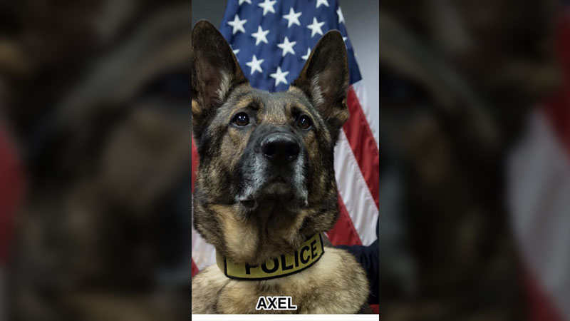 K9 Axel (Lawrence Police Department)