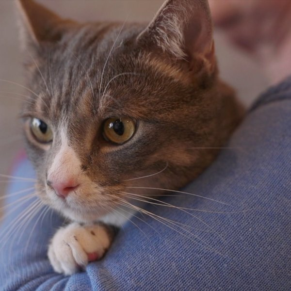 Meet Speedy, FOX8's Pet of the Week