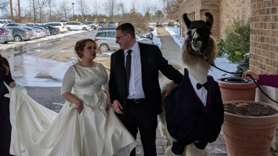 Riva Weinstock was unamused when her brother Mendl showed up to her wedding