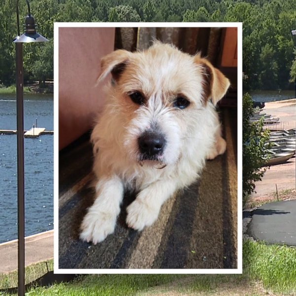 City worker saves dog from drowning at Salem Lake
