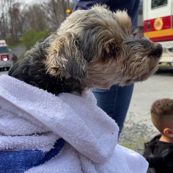 Randolph County family pet survives destructive house fire