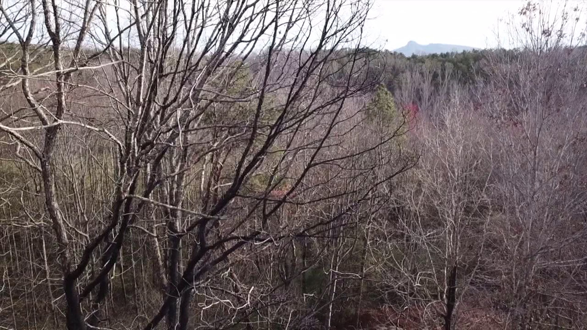 The secluded area where Ronda Blaylock's body was found