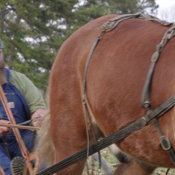 Local man honors grandfather by continuing family tradition of plowing fields