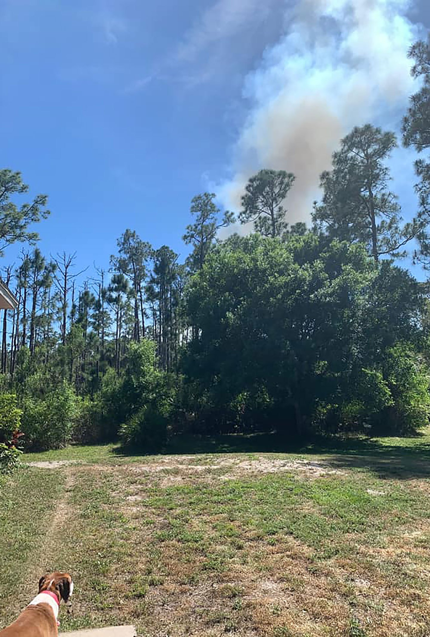Gender reveal party ignites fire in Florida, fire officials say