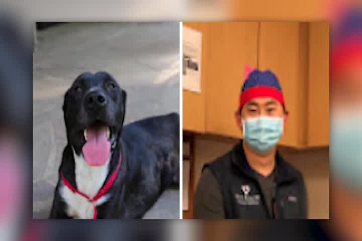 Dog rescue names pets after health heroes and essential workers