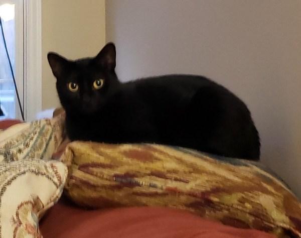 Meet Trinity, FOX8's Pet of the Week