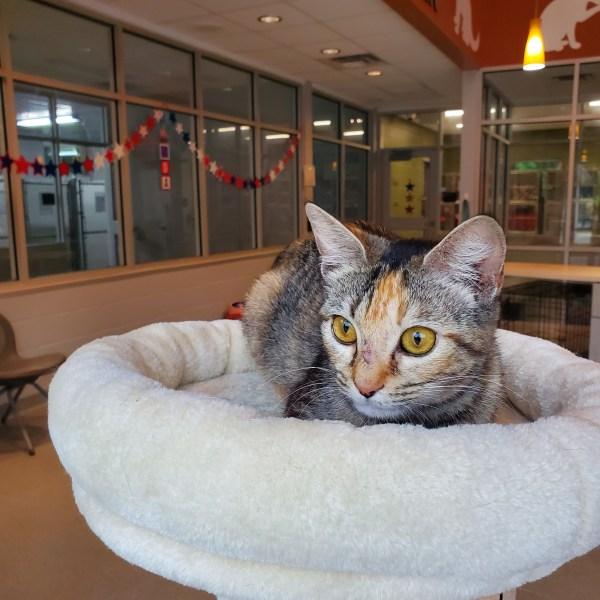 Meet Iris, FOX8's Pet of the Week