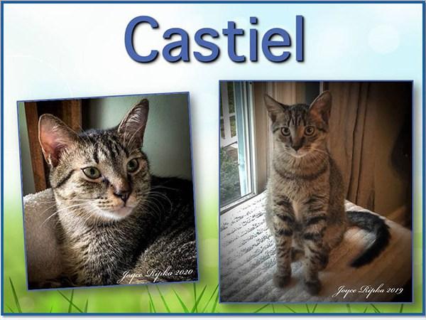 Meet Castiel, FOX8's Pet of the Week