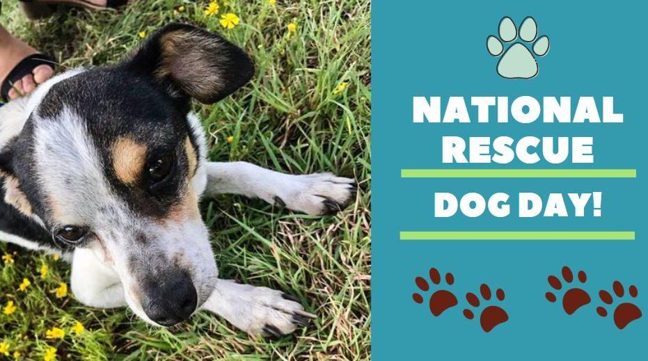 National Rescue Dog Day (Photo via WTEN)