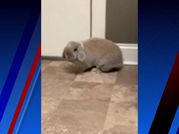 Meet Malibu, FOX8's Pet of the Week