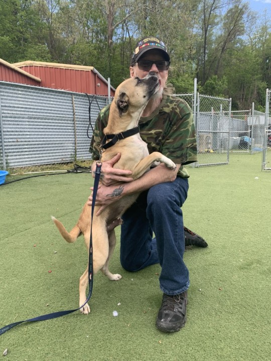 Army veteran uses stimulus check to help hard-to-adopt NC shelter dogs find their forever homes