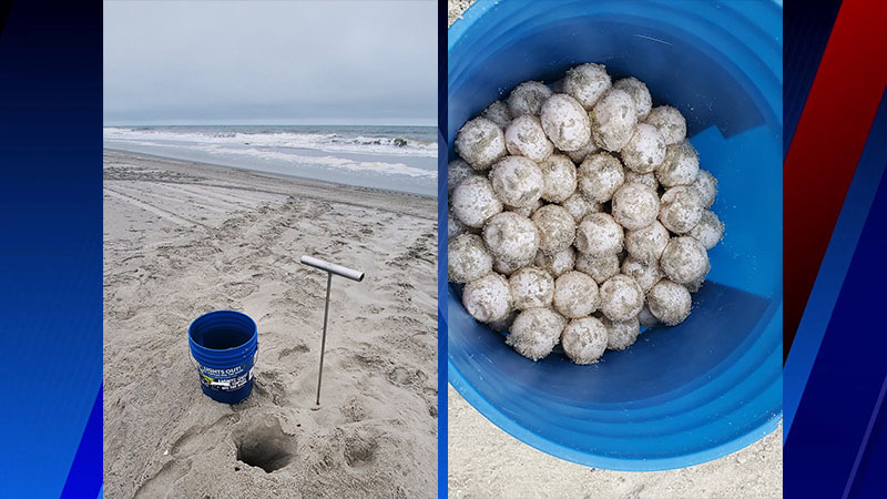Myrtle Beach welcomes first sea turtle nest of 2020 (Myrtle Beach City Government/Facebook)
