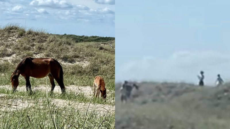 NC horse foundation asking for public's help identifying men who chased, harassed mare and foal (source: Foundation for Shackleford Horses)