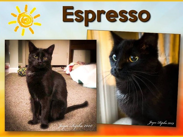 Espresso is our Pet of the Week!