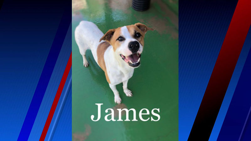 James is our Pet of the Week!