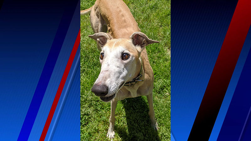 Meet Apple, FOX8's Pet of the Week