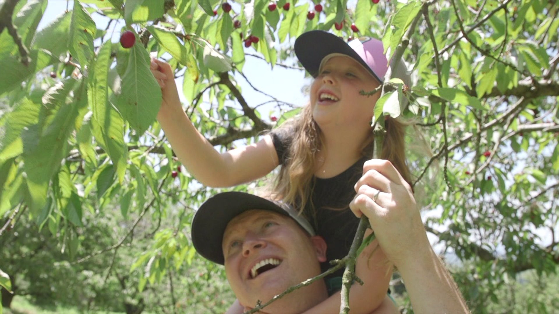 Virginia man keeps up tradition of offering cherry picking for families