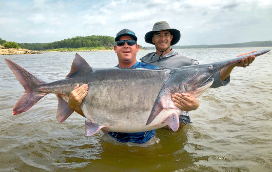 Angler James Lukehart of Edmond holds the potentially record-setting American paddlefish that he snagged June 28, 2020. (Photo by Jason Schooley/ODWC)