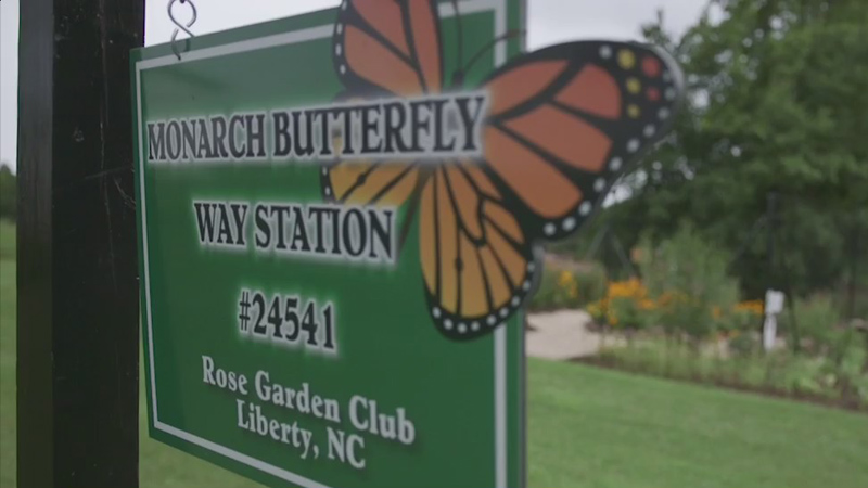 Rose Garden Club in Liberty provides way station for monarch butterflies