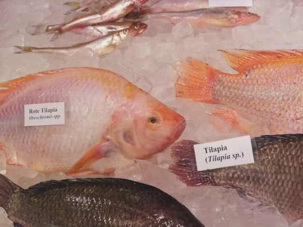 UNC class has students investigate mislabeled seafood