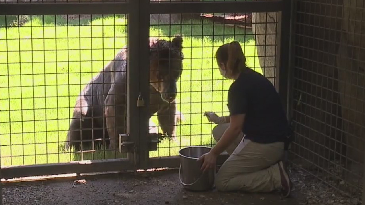 Meet the zookeepers behind the North Carolina Zoo for Zookeeper's Appreciation Week
