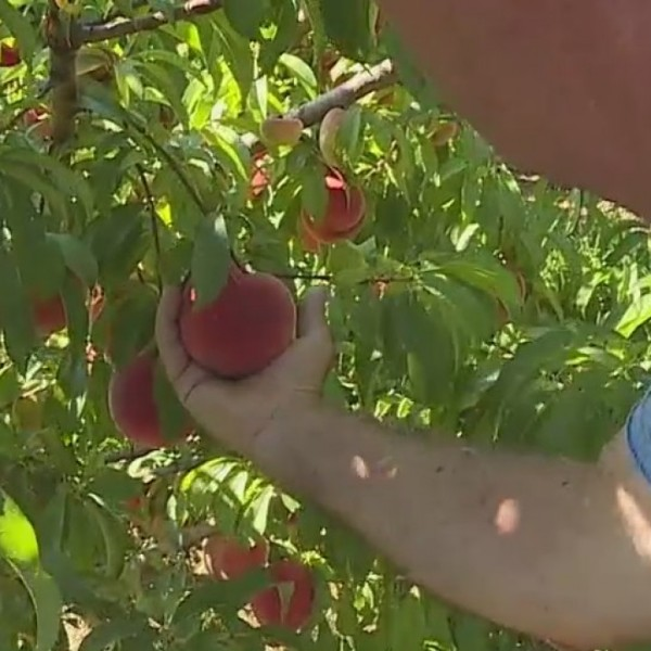 Destination Vacation: Sink your teeth into Bee Sweet Orchards in Reidsville