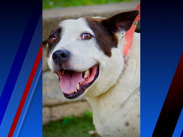 Meet Gerty Bell, FOX8's Pet of the Week