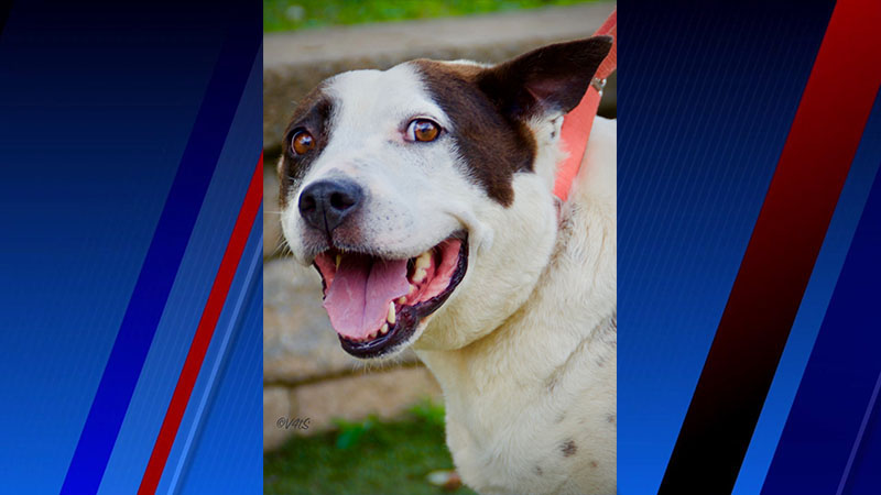 Meet Gerty Bell, FOX8's Pet of the Week
