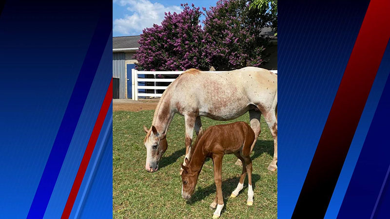 HERO of Forsyth County wants help naming newborn foal