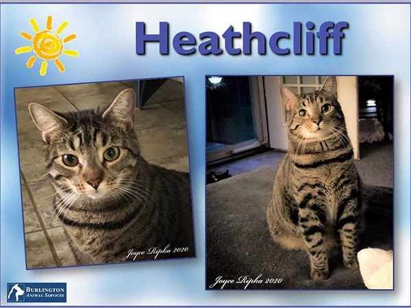 Meet Heathcliff, FOX8's Pet of the Week