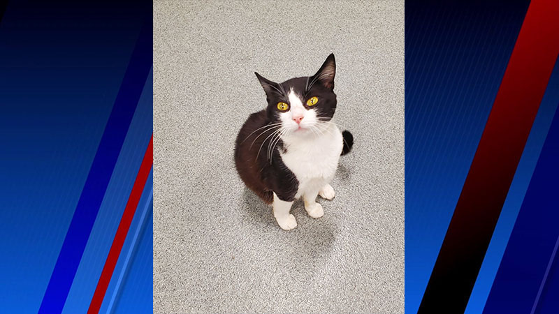 Meet Butler, FOX8's Pet of the Week