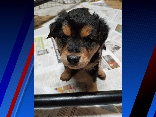 Rey is our Pet of the Week!