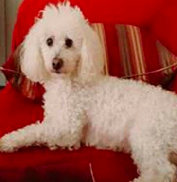 Jewel McKie left her home on Simsbury Rd on July 12, with her poodle Leo and has not returned. (Source: Charlotte-Mecklenburg Police Department)
