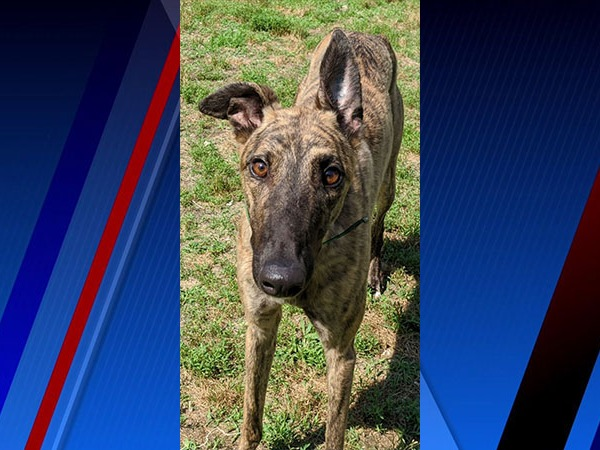 Meet Evie, FOX8's Pet of the Week