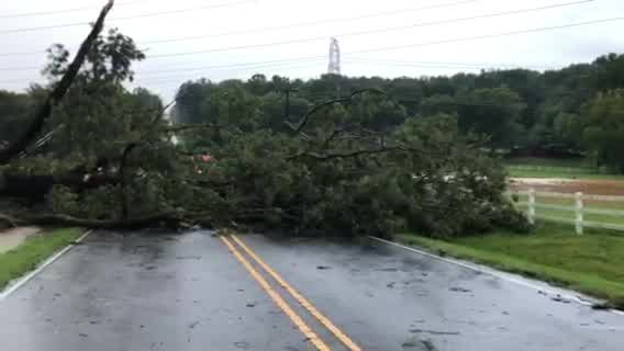 Tree falls on vehicle on Thomasville Road in Winston-Salem